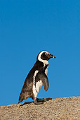 BRD 05 KH0002 01
