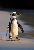 BRD 05 KH0005 01