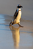 BRD 05 KH0006 01