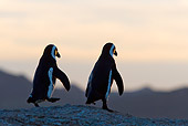 BRD 05 KH0009 01