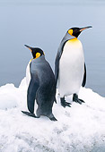 BRD 05 LS0002 01