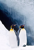 BRD 05 LS0003 01