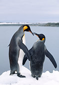 BRD 05 LS0004 01