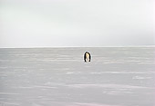 BRD 05 MR0003 01