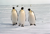 BRD 05 MR0007 01