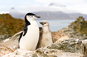 BRD 05 SK0001 01
