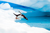 BRD 05 SK0005 01