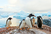 BRD 05 SK0009 01