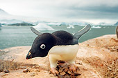 BRD 05 SK0010 01