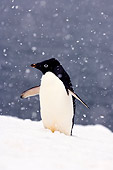 BRD 05 SK0013 01