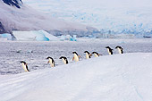 BRD 05 SK0014 01