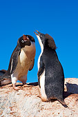 BRD 05 SK0016 01