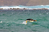BRD 05 SK0020 01