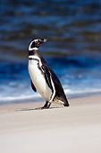 BRD 05 SK0021 01