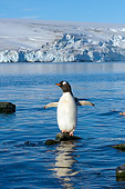 BRD 05 SK0022 01