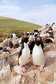 BRD 05 SK0023 01