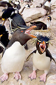 BRD 05 SK0025 01