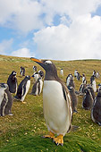 BRD 05 SK0027 01
