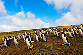 BRD 05 SK0028 01