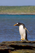 BRD 05 SK0030 01
