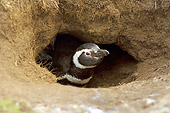 BRD 05 SK0032 01
