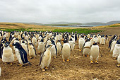 BRD 05 SK0033 01