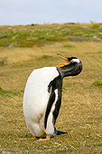 BRD 05 SK0037 01