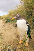 BRD 05 SK0038 01