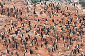 BRD 05 SK0043 01