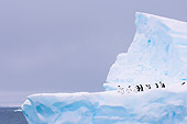 BRD 05 SK0053 01