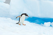 BRD 05 SK0055 01