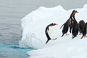 BRD 05 SK0057 01