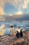 BRD 05 SK0062 01
