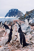 BRD 05 SK0064 01