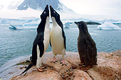 BRD 05 SK0066 01