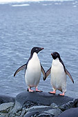 BRD 05 SK0070 01