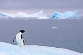 BRD 05 SK0071 01