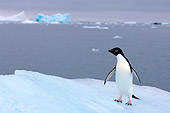 BRD 05 SK0072 01