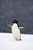 BRD 05 SK0080 01