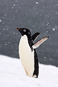 BRD 05 SK0081 01