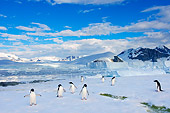 BRD 05 SK0086 01