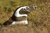 BRD 05 SM0014 01