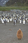 BRD 05 SM0017 01