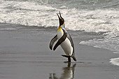 BRD 05 SM0025 01