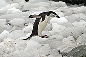 BRD 05 SM0030 01