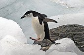 BRD 05 SM0031 01