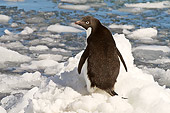 BRD 05 SM0040 01