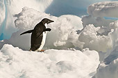 BRD 05 SM0042 01
