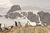 BRD 05 SM0054 01