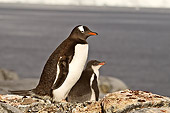 BRD 05 SM0058 01
